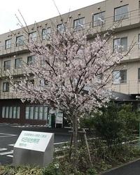 蒲田分院さくら1.jpg
